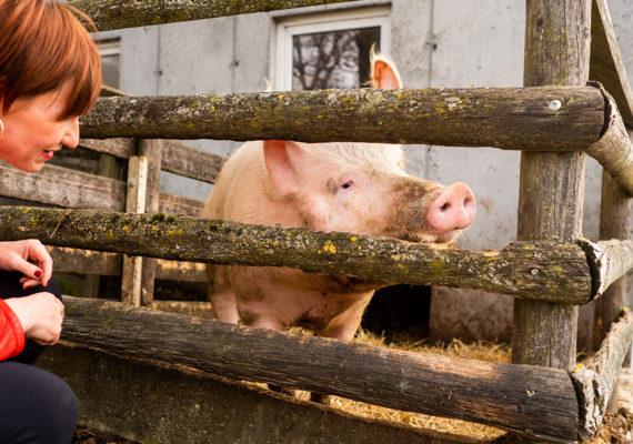Bio Schwein Jacquline